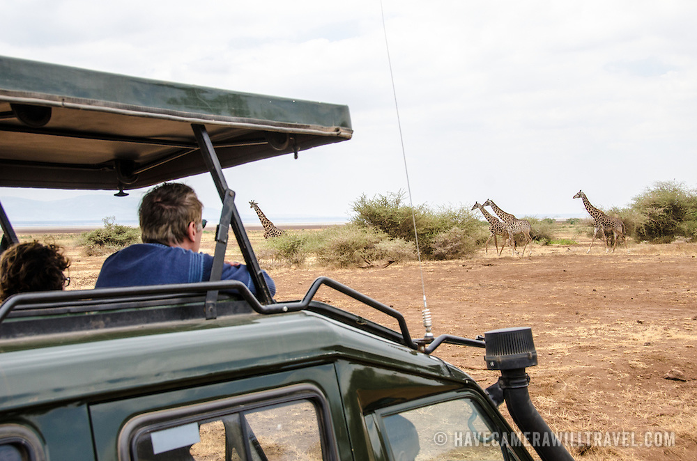 Tourists in a pop-up top safari vehicle watch a group of giraffes walking by in the disance at Lake Manyara National Park in northern Tanzania.