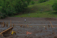 A man walks over a mud area in Paracatu de Baixo, district of the city of Mariana in brazilian state of Minas gerais. On november 5th, a mining waste dam failed causing a flood of mud.