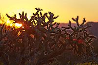 Organ Pipe Cactus Natinal Park