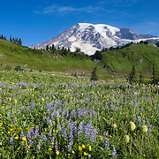 Summer wildflowers, including pasque flower and lupine, bloom in the Paradise Meadow in Mount Rainier National Park, Washington.
