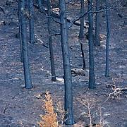 Colorado, Hayman Fire