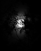 Harvest Moon photographed through, as yet, unfallen leaves.