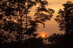 Warm sunset over natural forest.