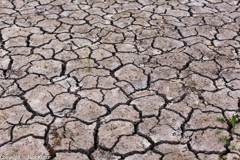 17 MARCH 2014 - BUNG KHAM PROI, PATHUM THANI, THAILAND: A dried rice field in Pathum Thani province. It hasn't rained in central Thailand in more than three months, impacting agriculture and domestic water use. Many farms are running short of irrigration water and salt water from the Gulf of Siam has come up the Chao Phraya River and infiltrated the water plants in Pathum Thani province that serve Bangkok. PHOTO BY JACK KURTZ