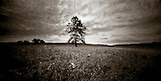 PL09510-00...MINNESOTA - Holga image of a lone tree in Buffalo River State Park.