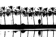 Israel, Galilee, silhouette of palm trees with a Fish breeding pool in the foreground in black and white