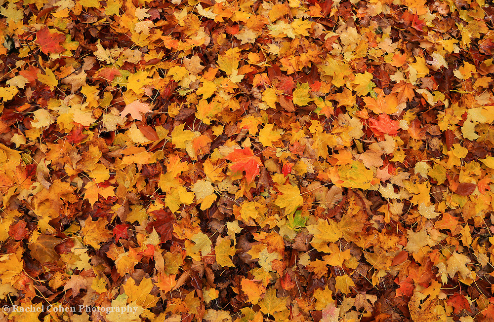 &quot;Rain Drops on Autumn&quot;<br />