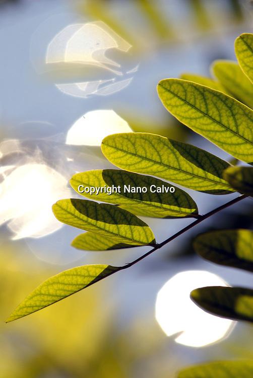 Natural Ibiza<br /> Fine Art Photography by Nano Calvo