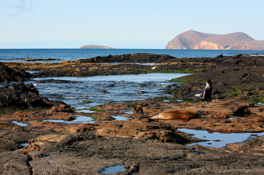 South America, Ecuador, Galapagos Islands, Santiago Island, James Island, Port Egas.