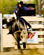 Rodeo, Bull Rider, Big Timber, Montana