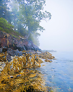 0902-1012 ~ Copyright: George H.H. Huey ~ Curtis Island in fog.  Camden Harbor. Penobscot Bay, Maine