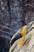 Autumn color and the Painted Wall. Black Canyon of the Gunnison National Park near Montrose, Colorado.