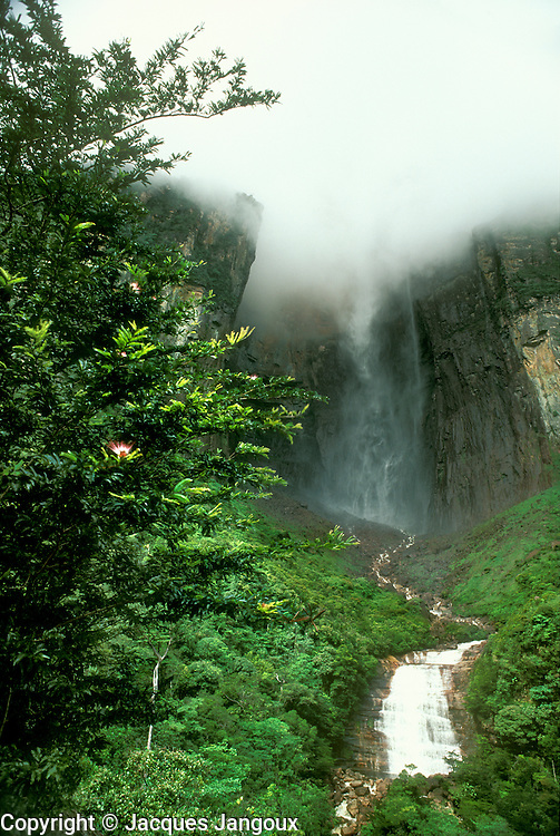 Angel Falls highest waterfall in world in Canaima National Park with low clouds in early morning at Auyantepui table mountain Venezuela. Clouds will raise with sun heat then evaporate.