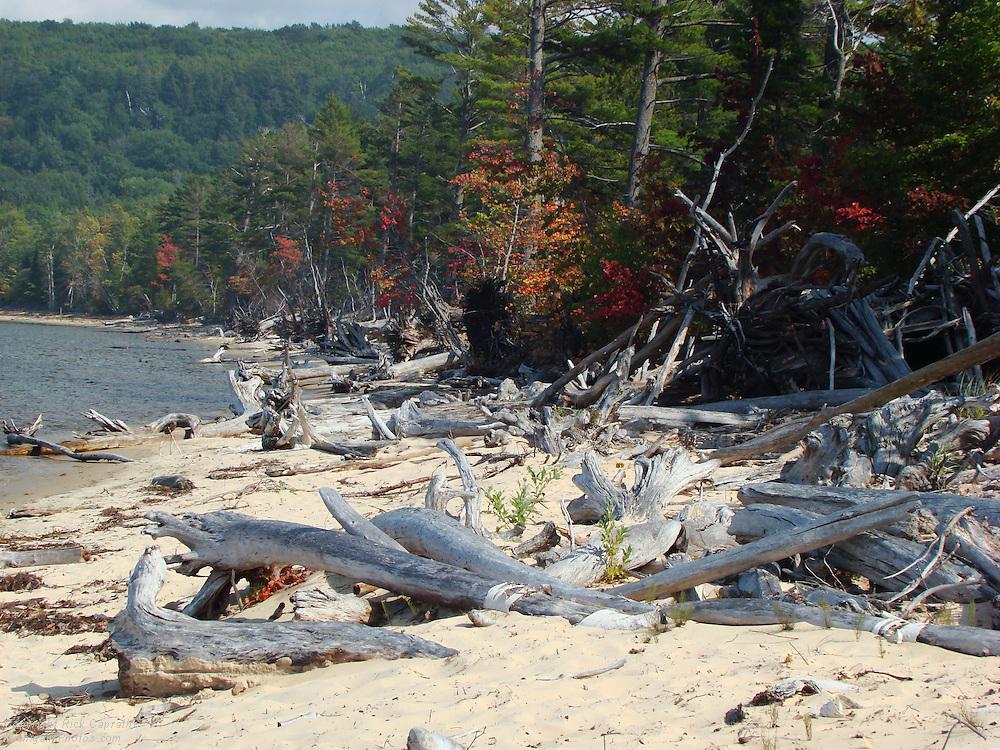 Beach Drift Trees & Driftwood, Sand Point, Pictured Rocks, Michigan's Upper Peninsula