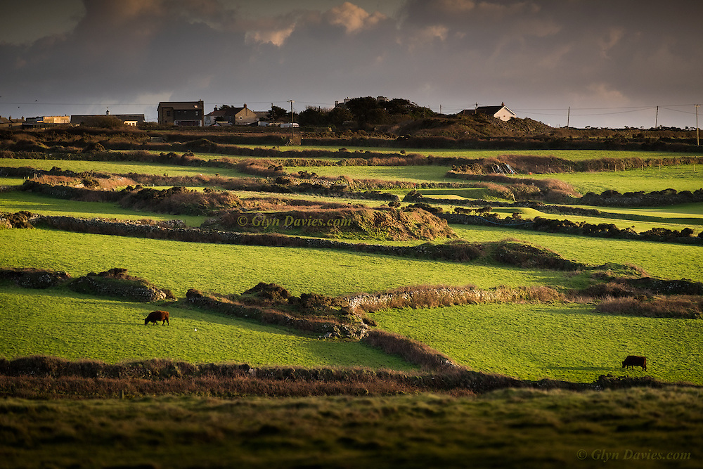 Low sunlight casts long shadows over ancient walled fields just west of St Just in West Penwith, Cornwall. Shower clouds form a dark background against the agricultural foreground of vivid green grass between higgledy piggledy drystone walled pasture.