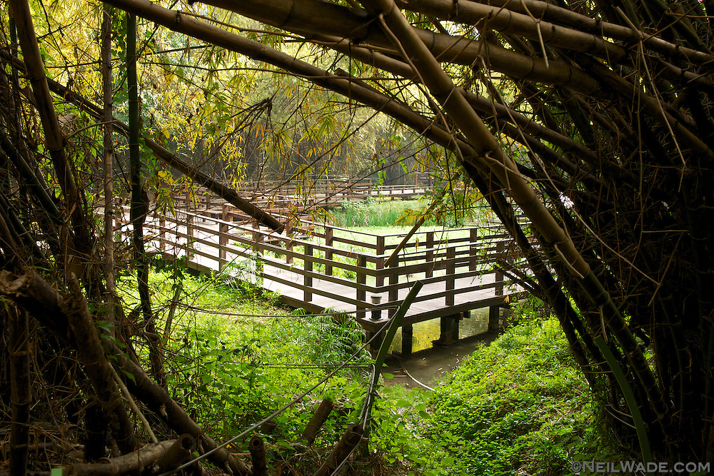 Liuqiu Taiwan  city pictures gallery : small pond in a bamboo forest on Little Liuqiu Island, Taiwan.