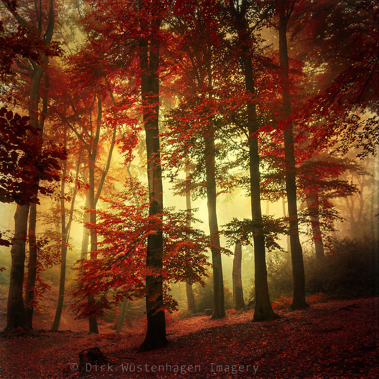 Autumnly forest impression. Tinted and texturized photograph.
