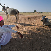Rajasthani farmer watching his cows in the Thar desert near Jodhpur, India.