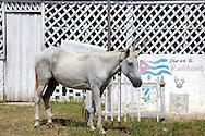 Horse in Pinar del Rio, Cuba.