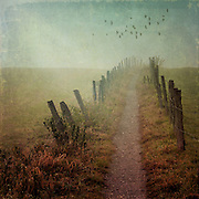 Path through paddocks on a misty fall morning - texturized photograph processed on iPhone 5S