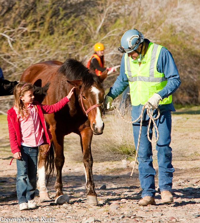 16 MARCH 2010 -- BUCKEYE, AZ: Alyssa Peterson (CQ) 8 and Mark Eshenbaugh walk Colorado away the helicopter landing zone near Buckeye Tuesday morning. Colorado has spent the last several days marooned on a sandbar in the middle of the river after he and his owners were nearly swept downstream during a trail ride.    PHOTO BY JACK KURTZ