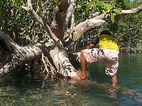 A little crocodile hunter in the mangroves