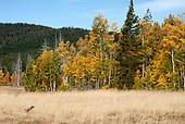 High Sierran Landscapes  - North