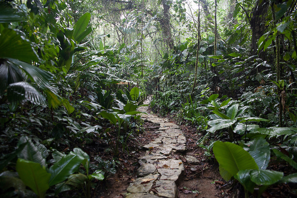 One of the many paths of Finca Bellavista inside the forest