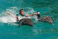 Bottlenose dolphin (c) (Tursiops truncatus)&amp;#xD;Ocean World Interactive Marine Park, Puerto Plata, Dominican Republic, Caribbean Sea<br />