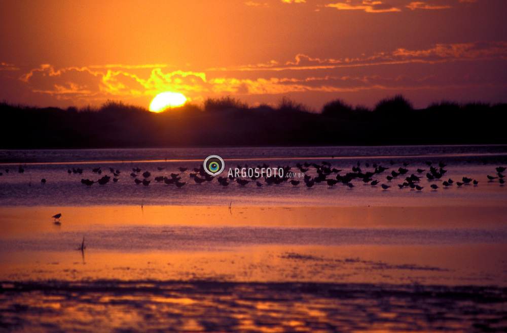Mostardas,  RS - Brasil; 1998.Parque Nacional da Lagoa dos Peixes, santuario de aves migratorias, fundado em 1986./ National Park of Lagoa dos Peixes (Fish Lagoon), sanctuary of migrating birds..Adri Felden/Argosfoto