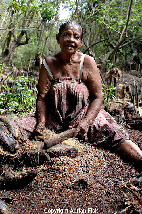 On the south Sri Lankan coast Tsunami affected women beat coconut husks to make coir. The coir industry helps sustain many of those whose lives were drastically altered by the Tsunami.