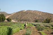 "A visit to the organic farm ""Huerta Los Tamarindos"" in San Jose del Cabo."