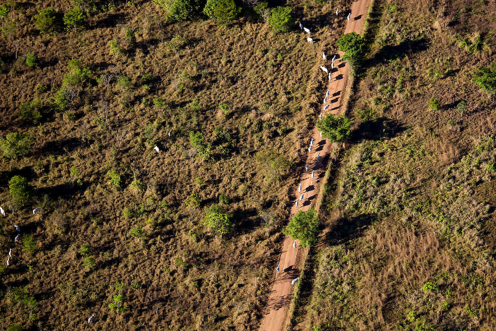 Frogorifico Quatro Marcos (cattle farm) as seen from the air above Mato Grosso, Brazil, August 7, 2008. Daniel Beltra/Greenpeace
