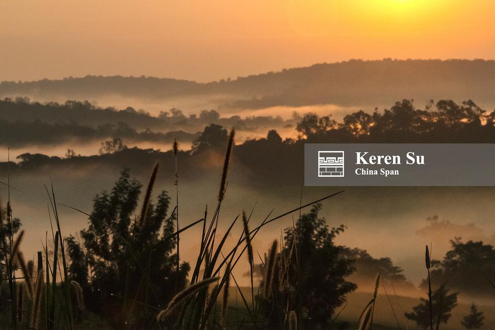 Forest in morning mist, Kibale National Park, Uganda