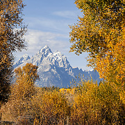 WY01833-00...WYOMING - The Grand Teton mountain framed by trees in Grand Teton National Park.