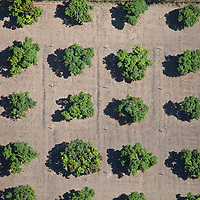 Field of trees from above, Guatemala