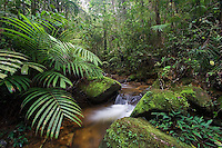 A rainforest stream in montane forest, Mount Kinabalu, Sabah, Malaysia..