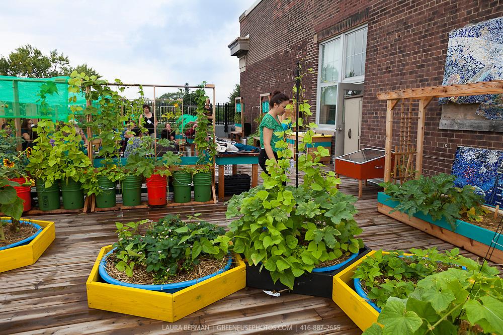 Vegetable garden pictures - Container Gardens School Gardens Rooftop Gardens