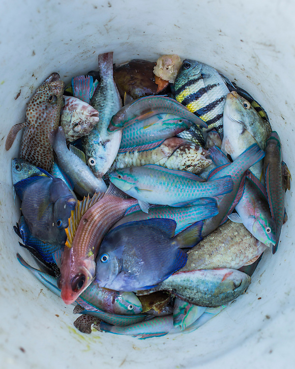Fish caught by local fishermen Jean Claude Pierre and Jean Claude Joseph on Monday, December 15, 2014 in Port-au-Prince, Haiti.