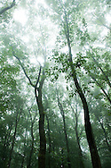 Oak and beech forest in the Morvan, France