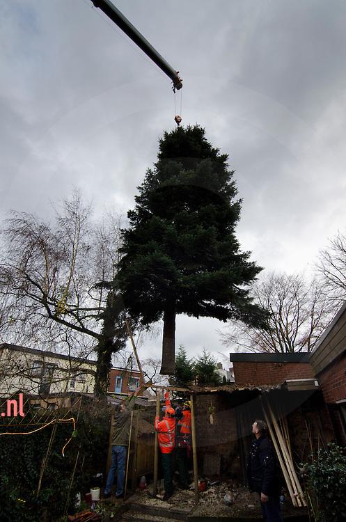 Nederland, enschede,6dec2011 de familie wissink aan de soendastraat wordt verlost van een erg grote spar uit de achtertuin. de boom zal fungeren als kerstboom op de oudemarkt.