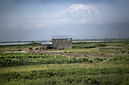 View for Ararat Mountain from Yerevan Outskirts...Ararat and Ani (ruins of Armenia ancient capitol) are among most popular names for shops, cafes and restaurants in Armenia. Ararat is even name for a man. Both of highest historical importance for Armenians are presently on the territory of Turkey...