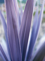Ornamental palm plant in garden&amp;#xA;<br />
