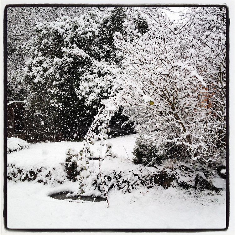 2012 JANUARY 15 - Snow accumulates in a backyard in Seattle, WA, USA, during a January snowfall. Taken with Apple iPhone using Instagram App. By Richard Walker