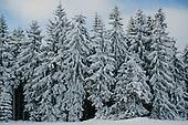 Winter in Poland
