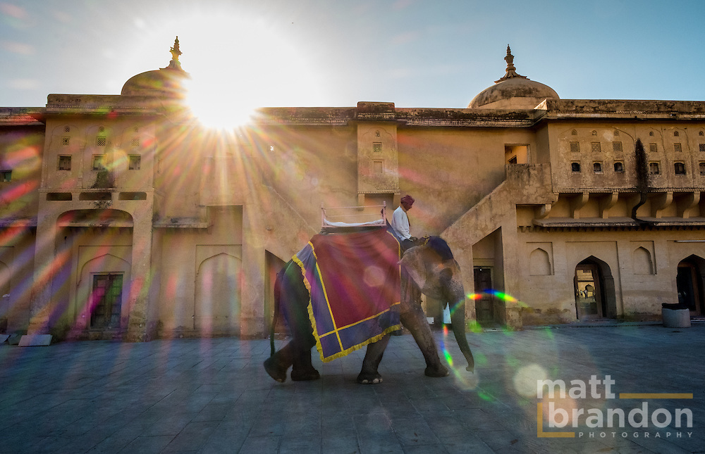 An Elephant leave with after depositing it's tourist at the Amber Fort, Amber Rajasthan, India