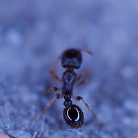 Zooming in behind an ant close enough to count individual hairs!