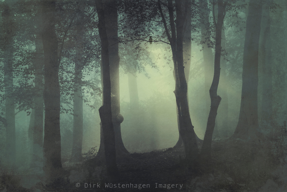 Mysterious misty forest scene on a fall morning<br /> <br /> Society 6 Prints &amp; more:<br /> https://society6.com/product/im-not-my-usual-self_print#1=45