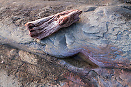 A piece of driftwood sits on the sandstone beach at Biggs Park/Jack Point/Duke Point in Nanaimo, British Columbia, Canada