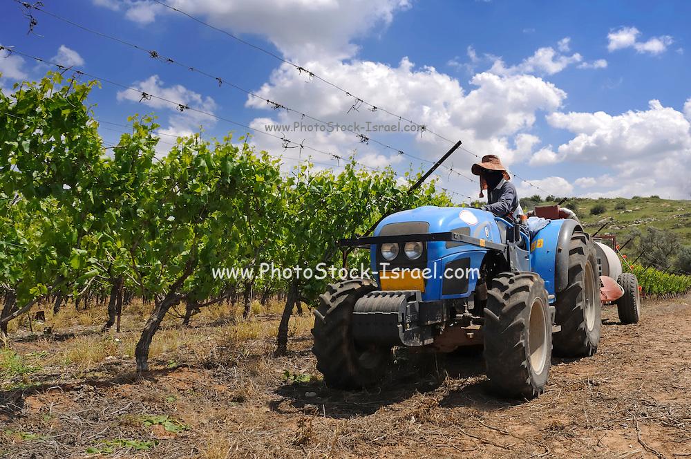Israel, Negev, Lachish Region, Vineyard, a tractor pulls a tank of pesticide